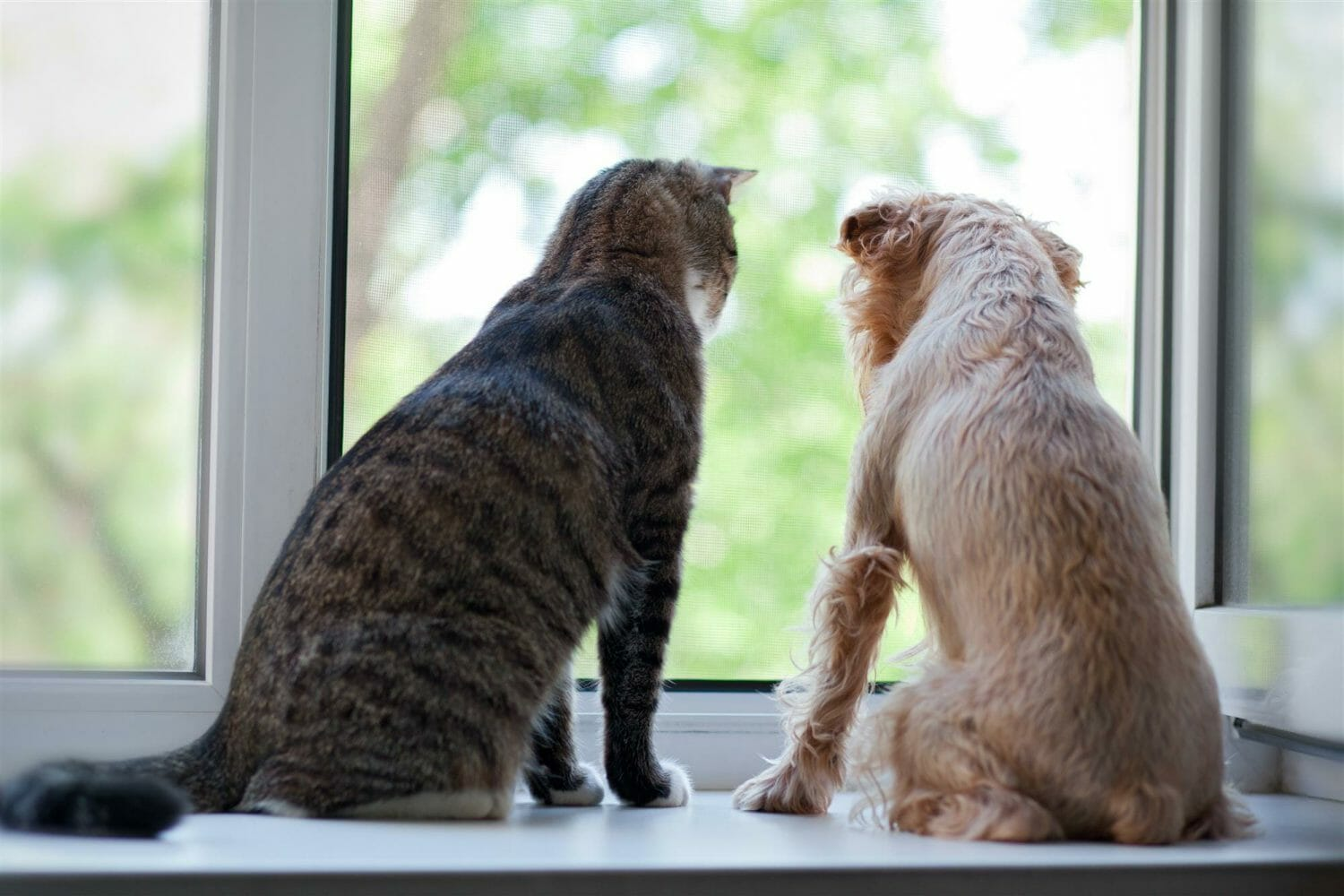 3 HVAC Tips for Pet Owners